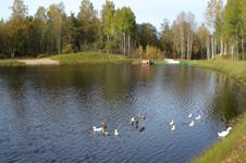Коттедж Два Богатыря, вид на озеро