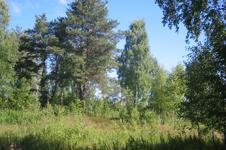 Коттедж Зеленый Терем, вид из окон