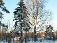 Территория Коттеджного комплекса, лес зимой