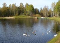 Русская дровяная баня, выход на озеро