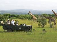 Тур в Африку на сафари